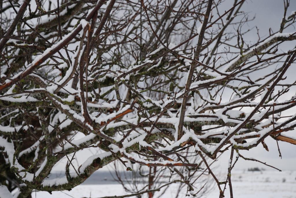 Snø i hagen